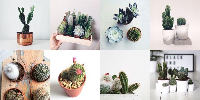 Cactusjes in je interieur