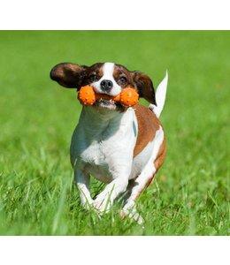 Major Dog Barbell, mini