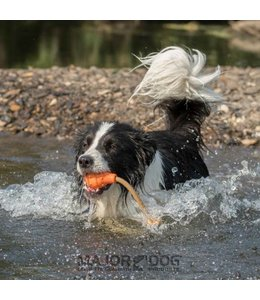 Major Dog floating Eddy, small