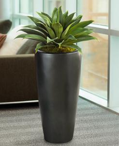 agave pflege 123zimmerpflanzen. Black Bedroom Furniture Sets. Home Design Ideas