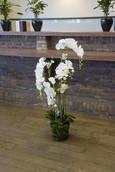 Kunstbloem Orchidee Phaleanopsis