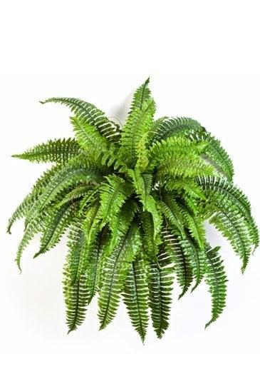 Kunstplant Krulvaren - (Zijdeplant)