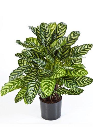 Kunstplant Calathea Groen