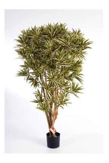 Kunstboom Dracaena Reflexa India