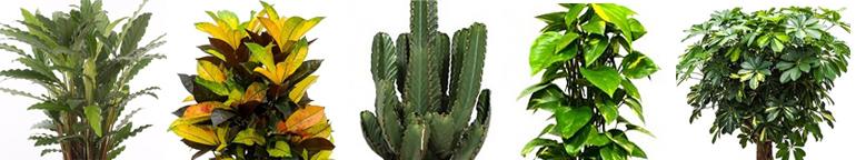 Binnenplanten online kopen