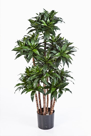 Kunstplant Dracaena Compacta - (Zijdeplant)