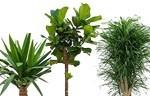 Plant van de maand