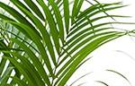 Prachtige palmen