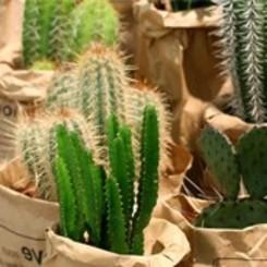 Succulenten & Vetplanten