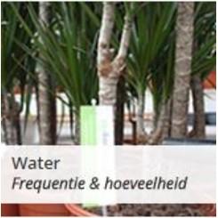 Kamerplanten water geven