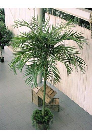 Kunstplant Areca de luxe