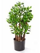 Kunstplant Crassula ovata