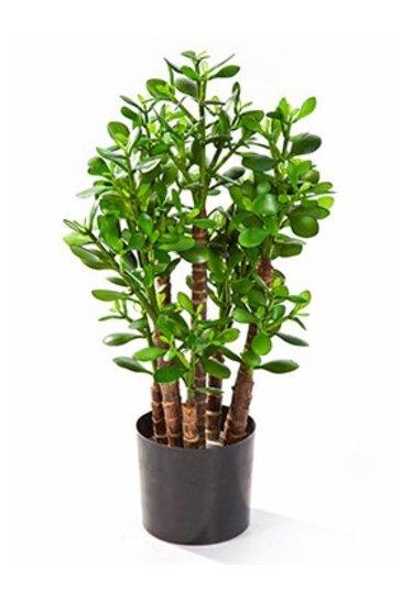 Kunstplant Crassula ovata - (Zijdeplant)