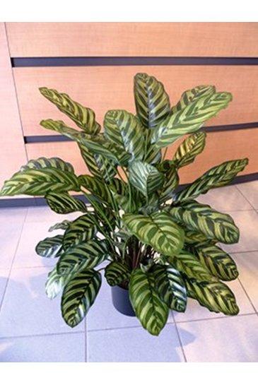 Kunstplant Calathea