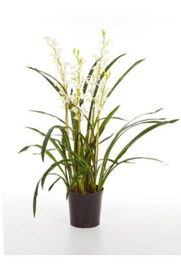 Kunstplant Cymbidium wild orchid - (Zijdeplant)