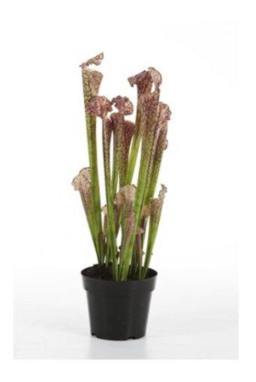 Kunstplant Sarracenia