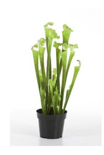Kunstplant Sarracenia - (Zijdeplant)