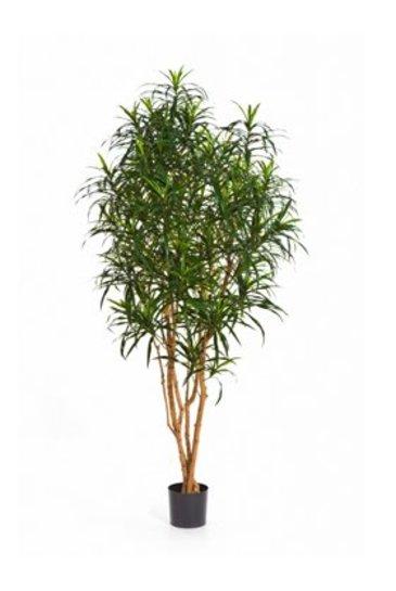 Kunstplant Dracaena anita tree
