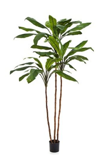 Kunstplant Cordyline fruticosa tree - (Zijdeplant)