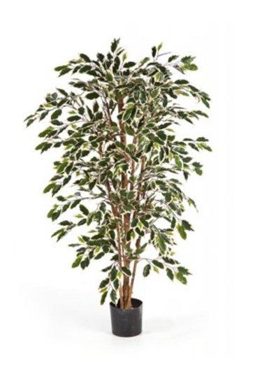 Kunstplant Ficus nitida - (Zijdeplant)