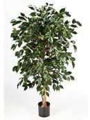 Kunstplant Ficus nitida exotica