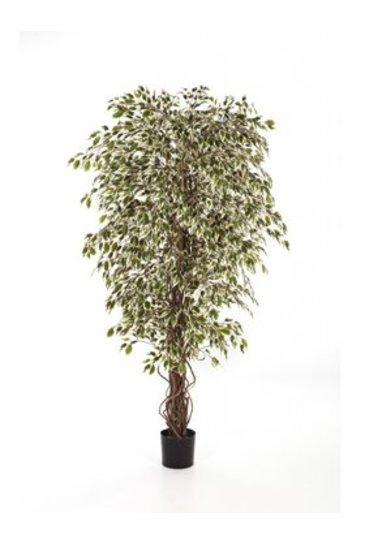 Kunstplant Ficus hawaiian liana