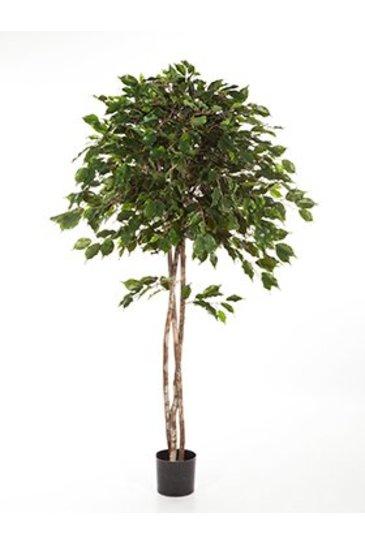 Kunstplant Ficus exotica umbrella - (Zijdeplant)