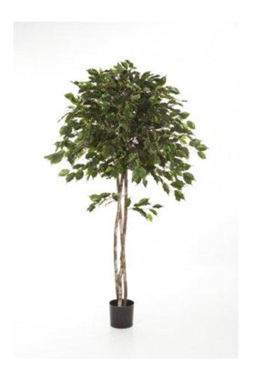 Kunstplant Ficus exotica umbrella