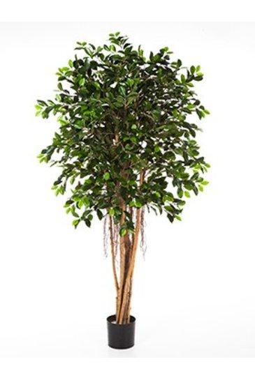 Kunstplant Ficus retusa