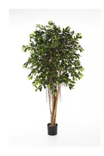 Kunstplant Ficus retusa - (Zijdeplant)
