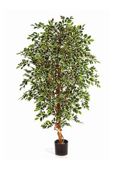 Kunstplant Gold ficus folia