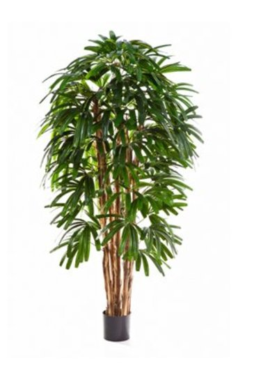 Kunstplant Rhapis palm