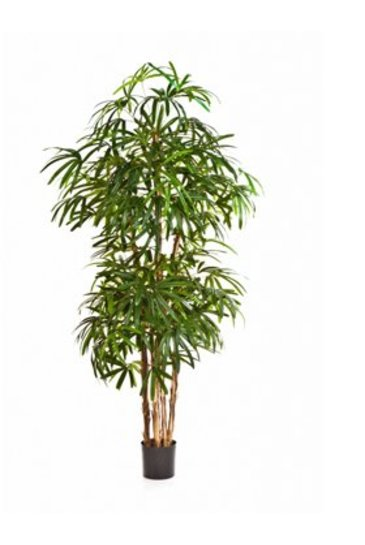 Kunstplant Natural rhapis palm