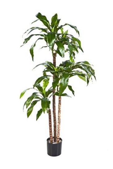 Kunstplant Dracaena fragrans steud