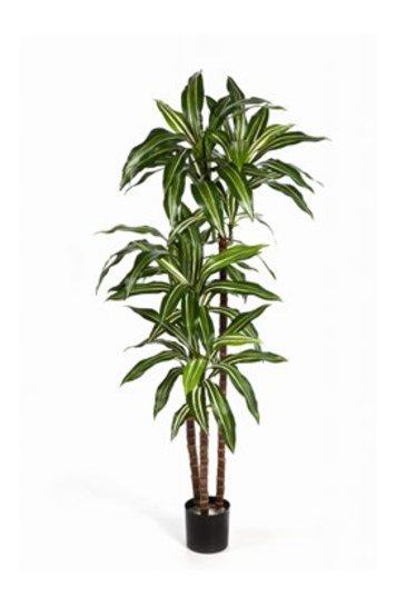 Kunstplant Dracaena fragrans steud - (Zijdeplant)