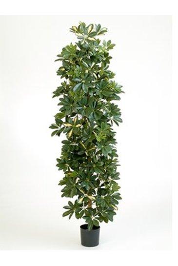 Kunstplant Column schefflera - (Zijdeplant)