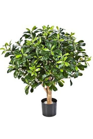 Kunstplant Pittisporum ball tree