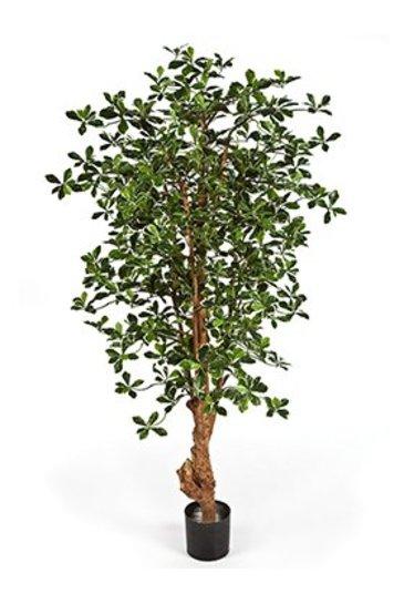 Kunstplant Forest black oliver