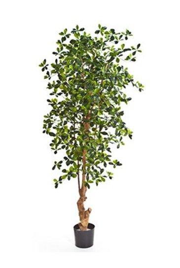 Kunstplant Forest black oliver - (Zijdeplant)