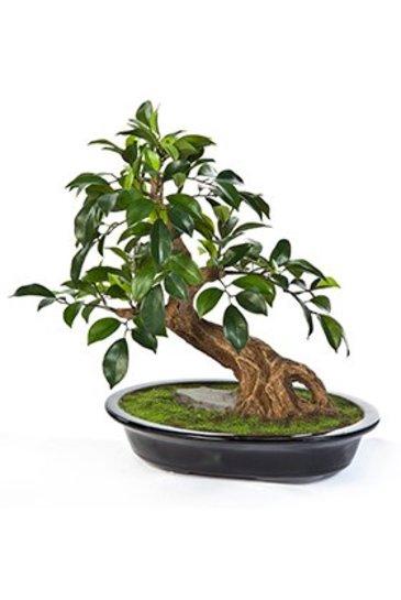 Kunstplant Ficus folia bonzai