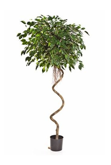 Kunstplant Ficus exotica spiral