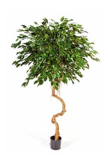 Kunstplant Ficus exotica grazy trunk
