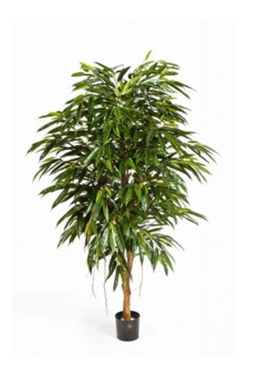 Kunstplant Longifolia royal tree