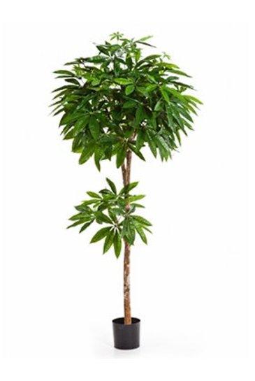 Kunstplant Pachira tree