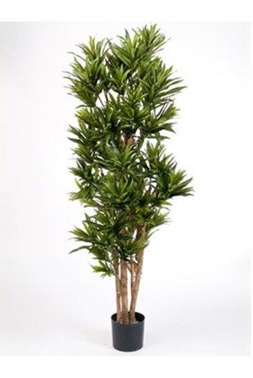 Kunstplant Dracaena reflexa