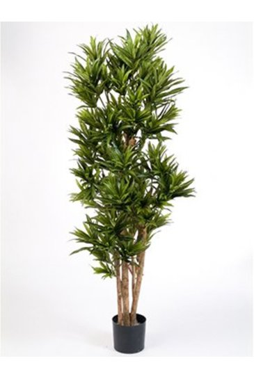 Kunstplant Dracaena reflexa - (Zijdeplant)