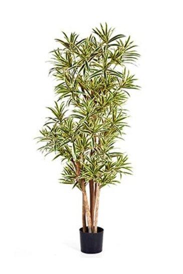 Kunstplant Pleomele song of india - (Zijdeplant)