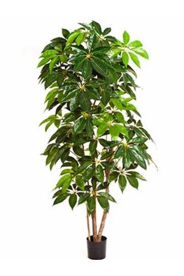 Kunstplant Schefflera amata - (Zijdeplant)