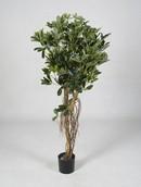 Kunstplant Schefflera arboricola