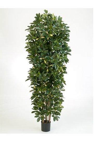 Kunstplant Schefflera gold capella